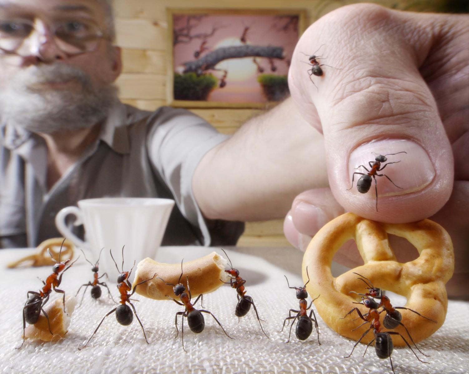 Ameisen & Co.: So besiegst du Schädlinge in deinem Haushalt ...