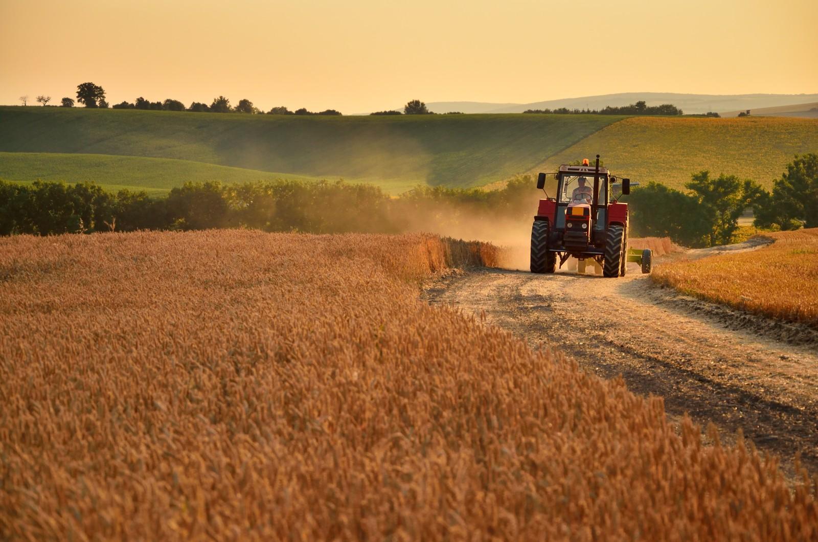 Konventionelle Landwirtschaft verursacht Artenschwund