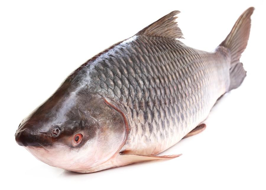 Fishy aus Vagina riechen
