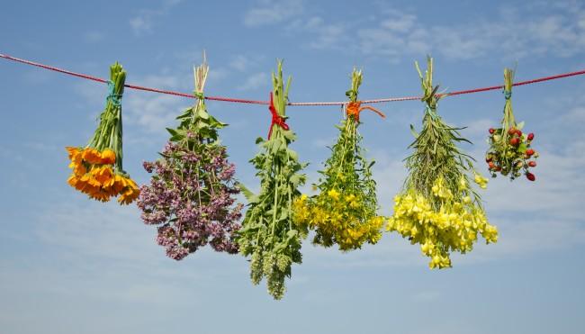 adaptogene heilpflanzen gegen den stress potente heilpflanzen f r die gesundheit. Black Bedroom Furniture Sets. Home Design Ideas