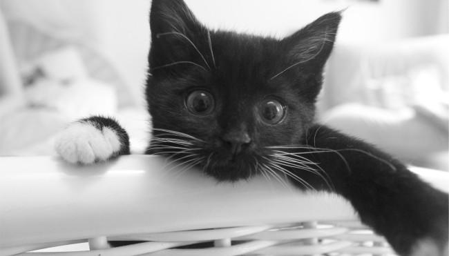 Schwanger Und Katzen