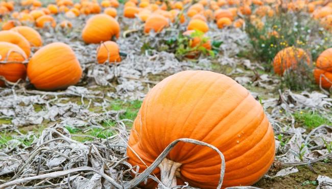 farbenfroh und lecker saisonales im oktober genie en im herbst codecheck info. Black Bedroom Furniture Sets. Home Design Ideas