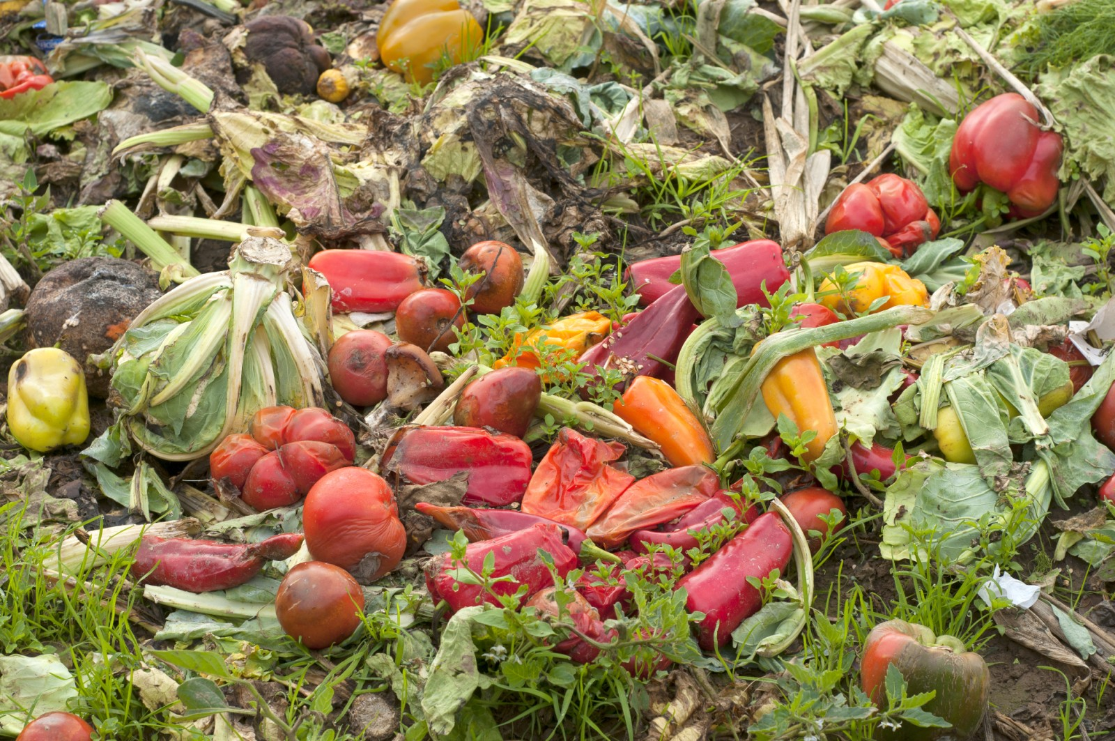 How To Start Eating Organic Food