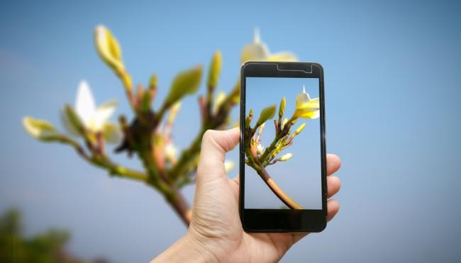 Die App Die Pflanzen Rettet Diagnose Tool Für Hobbygärtner