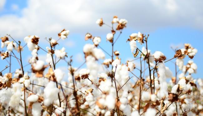 """Woher bezieht """"PUMA"""" Leder und Baumwolle  - Nachhaltigkeit in ... 2468dc40b6"""