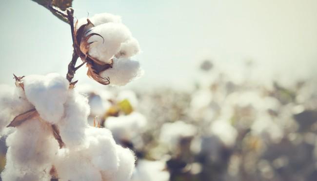"""Das Ziel von """"PUMA"""" ist es, bis zum Jahr 2020 insgesamt 50 Prozent  BCI-zertifizierte Baumwolle zu verwenden. Die wichtigsten Zulieferer wurden  bereits dazu ... ad73090cf4"""