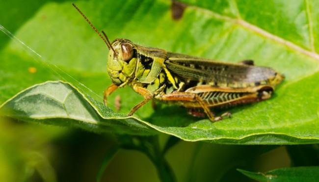 insekten sind in der schweiz bald offiziell lebensmittel insekten burger und heuschrecken. Black Bedroom Furniture Sets. Home Design Ideas