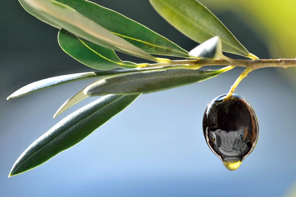 ist oliven l jetzt gut f r die haut oder nicht mediterranes heilmittel codecheck. Black Bedroom Furniture Sets. Home Design Ideas