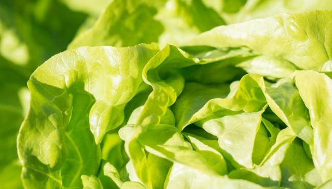3 tipps so bleibt salat lang frisch und knackig lebensmittel richtig lagern. Black Bedroom Furniture Sets. Home Design Ideas